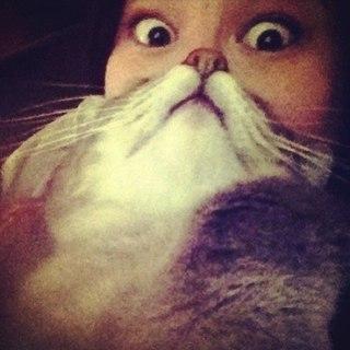 прикол котенка