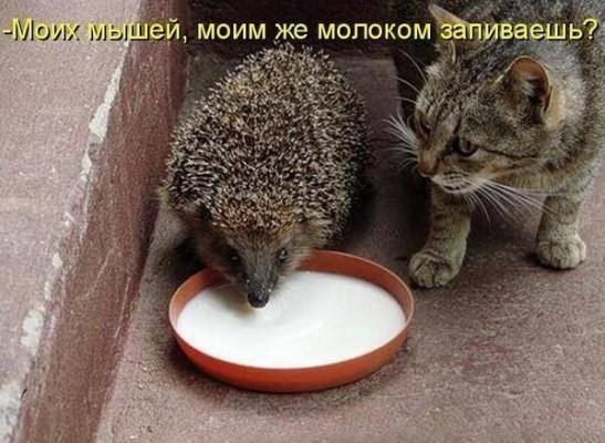 ежики совсем оборзели - едят из миски у кота