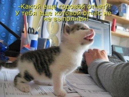 котовой отчес котика не выполнен