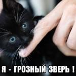котенок - грозный зверь