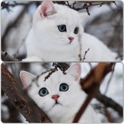 белая киса с большими глазами
