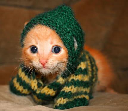 котенок с шарфиком