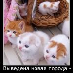 новая порода - хомячковые котята