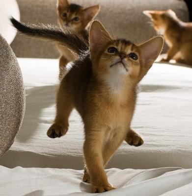 котенок в прыжке