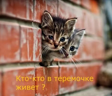 котята в кирпичах: кто-кто в теремочке?