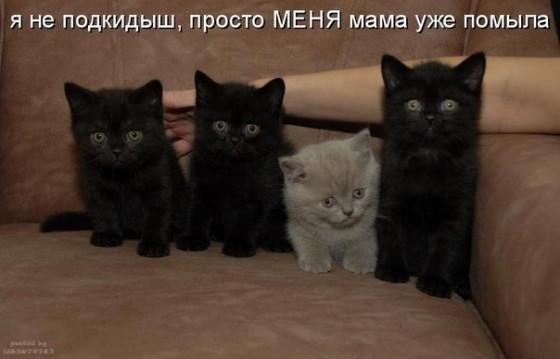котенка просто мама уже отмыла