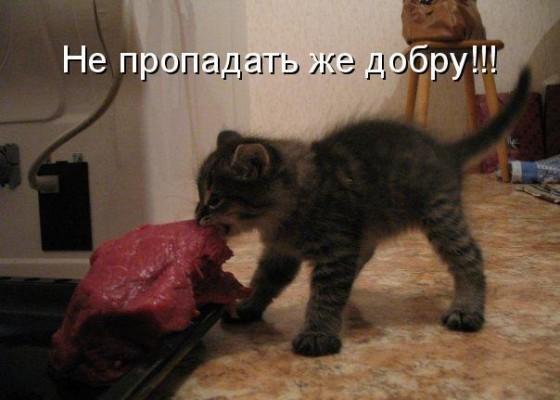 Котенок тащит мясо: Не пропадать же добру