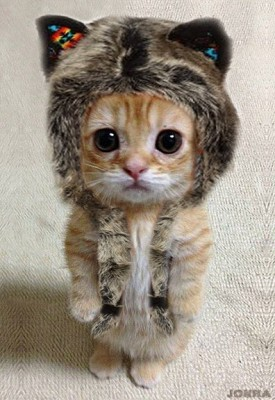 котенок няшка в шапке