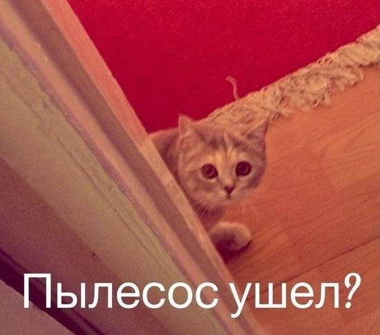 См еще мемы — смешные картинки котов