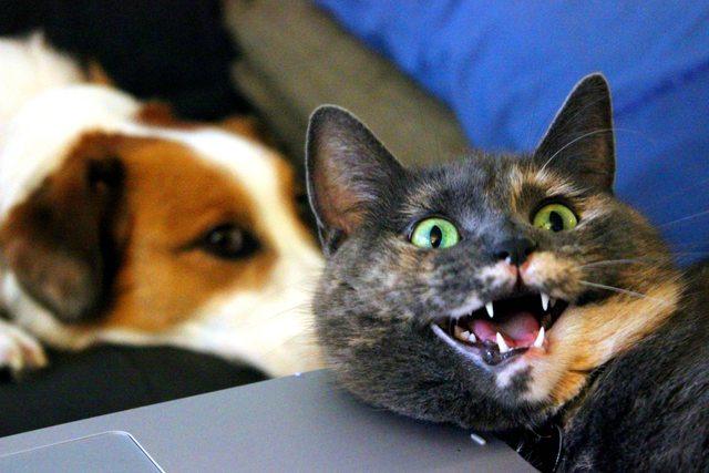 Смеющиеся коты фото