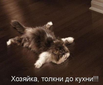толкни котика до кухни