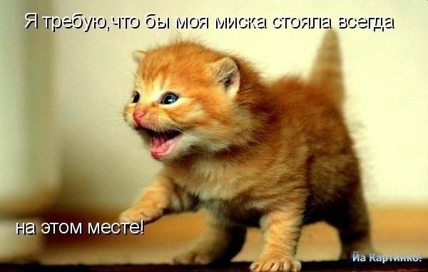 — смешные картинки котов с надписями