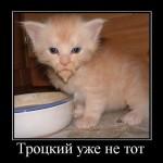 котенок троцкий уже не тот