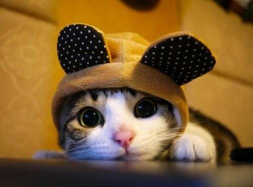кот в шапочке с ушками