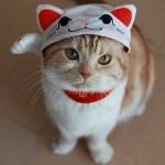 Красивый котик в шапочке