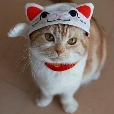 котик в шапочке с ушками