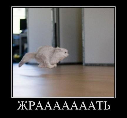 котик бежит жрать