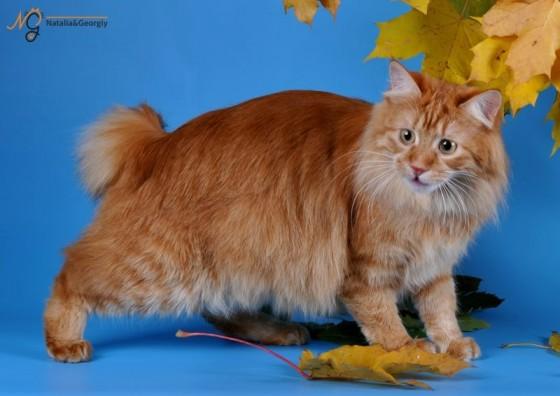 осенний рыжий кот