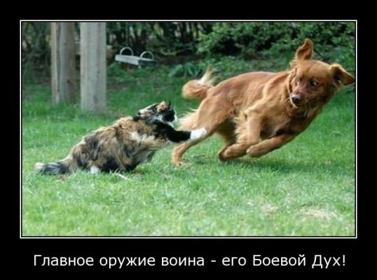 боевой дух кота