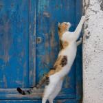 кот царапает стену