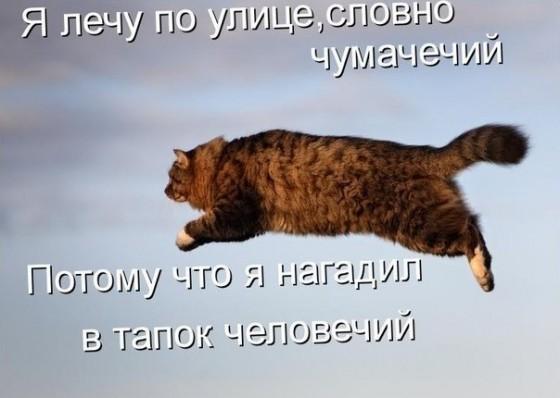 котик чумачечий