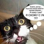 Котик: я схожу с ума