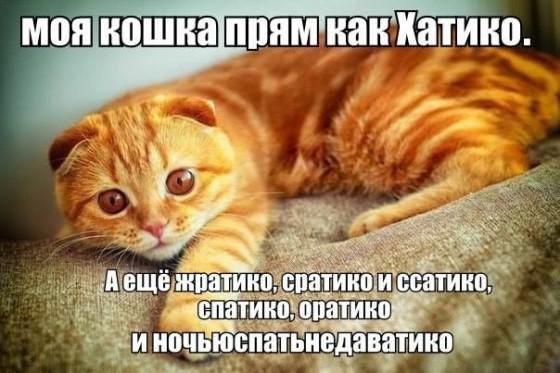 кошка хатико, жратико, ссатико