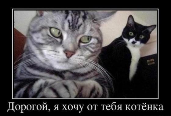 дорогой, я хочу от тебя котенка