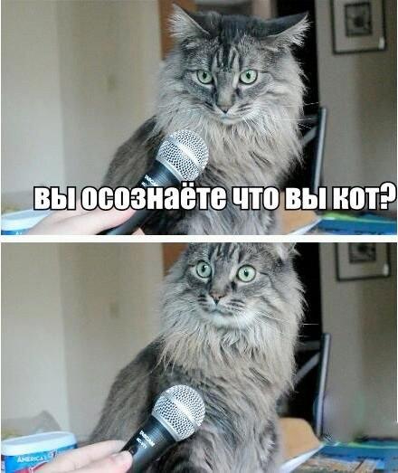 вы осознаете, что вы кот