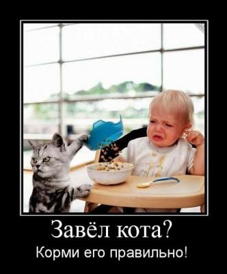 Завел кота - корми правильно