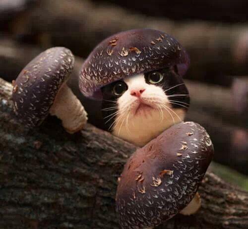 Осень грибы так и лезут… и осенние