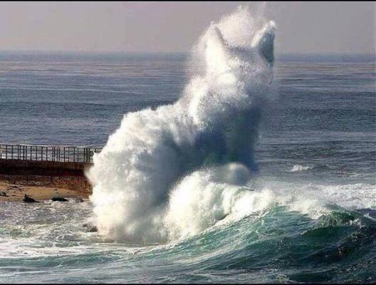 кот волна