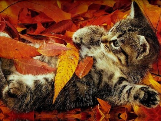 котенок в листьях