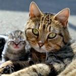 полосатая кошка с котенком