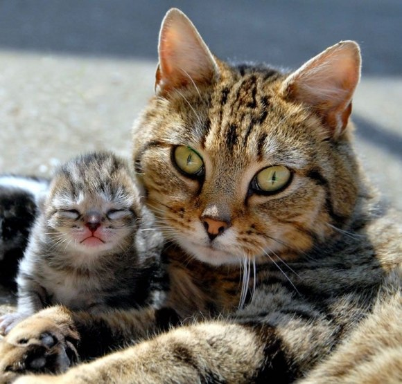 красивых кошек и котят