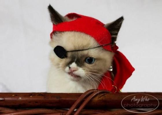 одноглазый котенок пират