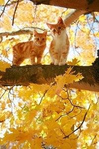 осенние коты в листьях