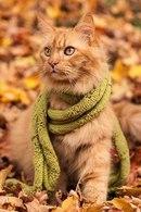рыжий кот с шарфиком в листьях