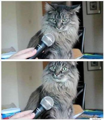 кот с микрофоном