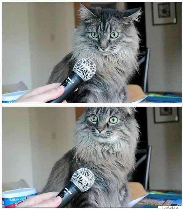 Мем кота с микрофоном оригинал