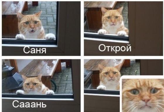 открой котику