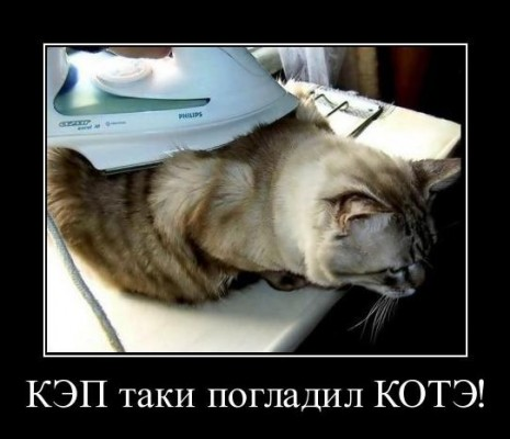 КЭП погладил котэ утюгом