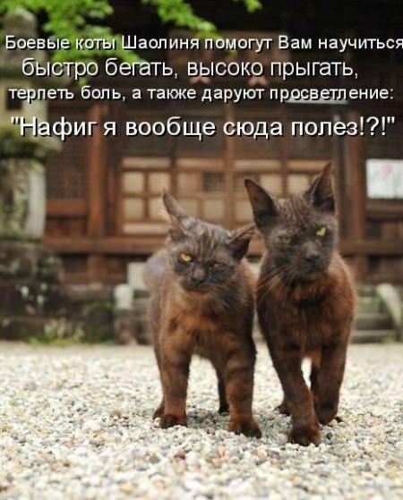 коты братья шаолиня
