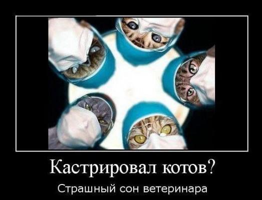 Кастрировал котов? Страшный сон ветеринара.