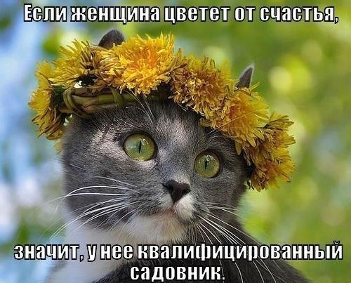 кошка с венком из одуванчиков