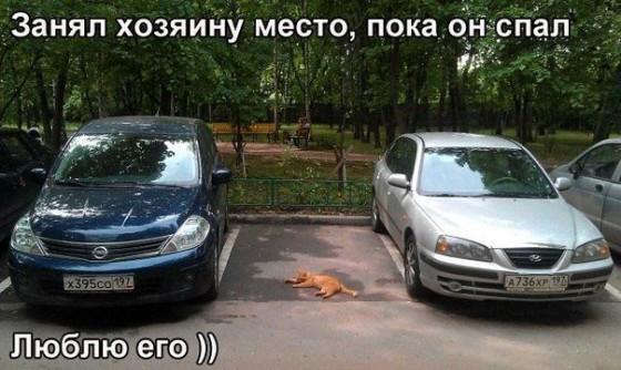 кот занял место на стоянке