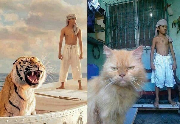 Life of Pi Questions and Answers  eNotescom