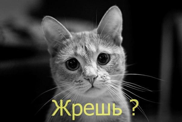 Ozodlik Radiosi, миллий гвардия (МГ) ходимининг фуаро билан