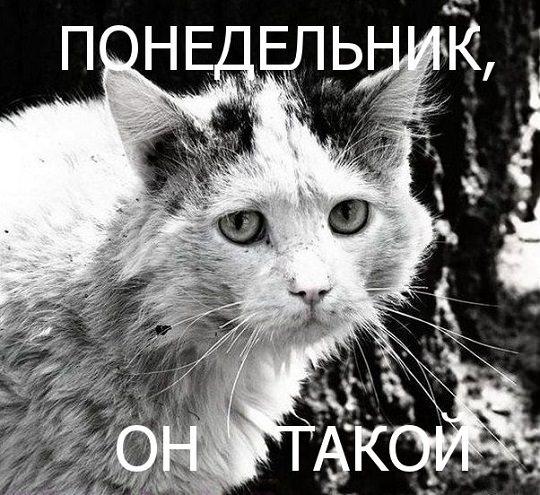 кот в понедельник