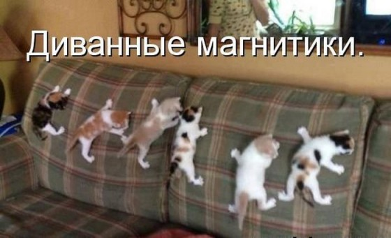 котята диванные магнитики
